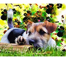 Gorgeous Terrier Dog Photographic Print