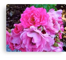 Governor General's Roses 19 Canvas Print