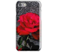 Late Summer Rose iPhone Case/Skin