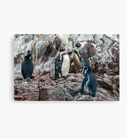Penguin. Canvas Print
