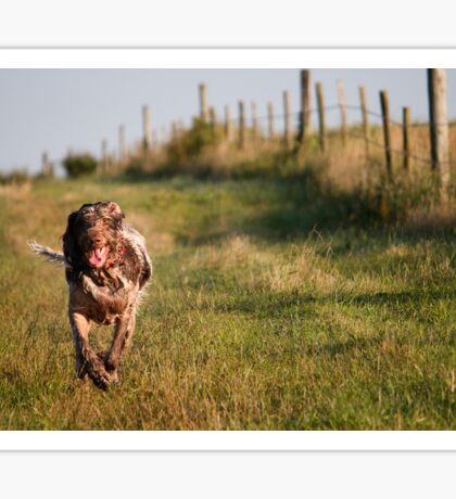 Brown Roan Italian Spinone Dog in Action Sticker