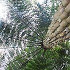 Tree fern  by phillip wise