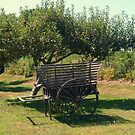 Another view - Antique Apple Cart, Prescott Farm, Middletown, RI by Jane Neill-Hancock