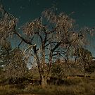 Flinders Moonilght Tree II by pablosvista2