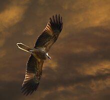 Hey Look, I Can Fly by byronbackyard