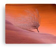 The Burning Bush of Secret Canyon Canvas Print