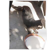 Cat/Milk bowl/Shadows/3 -(070912)- Digital photo Poster