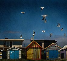 Birds and Boxes, Aspendale by Liza Clements