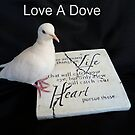 Love-A-Dove Calendar - NZ by AndreaEL