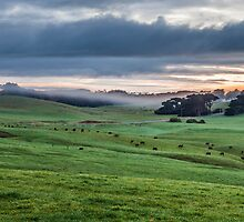 Foggy Farmscape by Martin Canning
