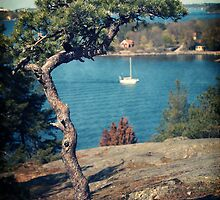 Pine on the Rocks by Carina514