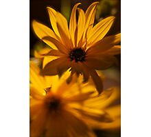 Yellow art. by Brown Sugar. was featured in A Place To Call Home !  BRINKS JOY TO ME !  Buy what you like!  Thx!  Views 86 Thx! Photographic Print