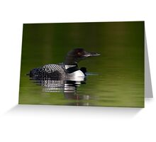 By her side - Common loon and chick Greeting Card