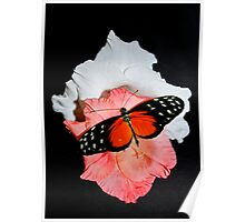 Butterfly on Gladioli Poster