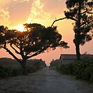 Sunset on Vineyards by Fran0723