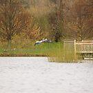 A crane in flight by Adam Kuehl