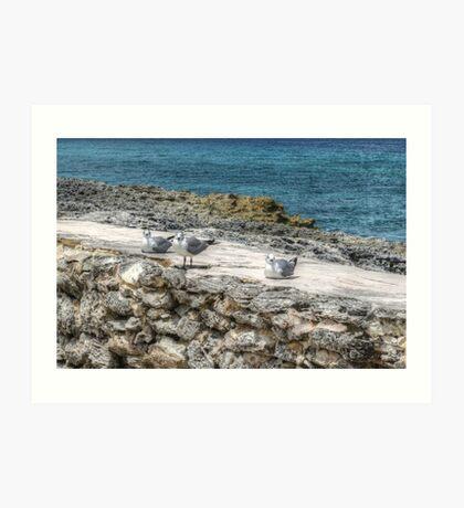 Seagulls in Paradise Island, The Bahamas Art Print