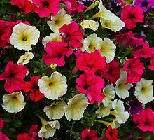 Full Bloom by karina5