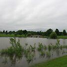A slightly flooded Lisle Community Park by Adam Kuehl