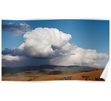 Storm Curly Tail Poster