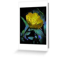 Hidden Buttercup Greeting Card