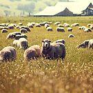 Flock Ewe by Christopher Burton