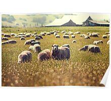 Flock Ewe Poster