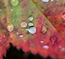 drops on red by JorunnSjofn Gudlaugsdottir