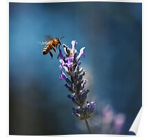 Bee in Blue Poster