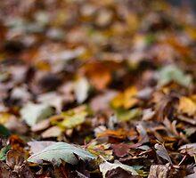 crunchy leaves by JorunnSjofn Gudlaugsdottir