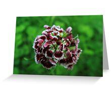 Springtime Flowers Greeting Card