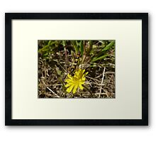 Yellow Wild Flower + Insect Framed Print