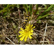 Yellow Wild Flower + Insect Photographic Print