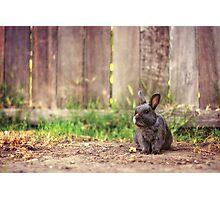 Some Bunny to Love Photographic Print