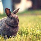 The Velveteen Rabbit by Christopher Burton