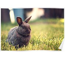The Velveteen Rabbit Poster
