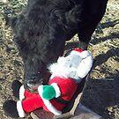 Please, Santa! by JobieMom