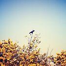 Bird's Eye View by Christopher Burton