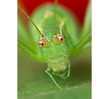 Grasshopper Photographic Print
