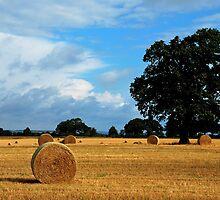 It is harvesting time by jchanders