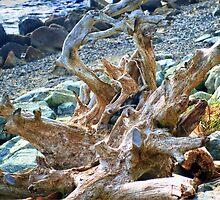 Driftwood by kendlesixx