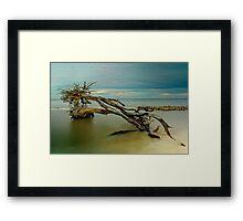 Nature's Habitat Framed Print