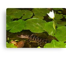 Water lily and buddy Canvas Print