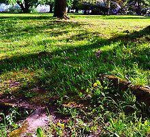 Grassy by kendlesixx