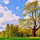 Tree and Park by kendlesixx