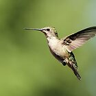 Hummingbird with full belly by Gregg Williams