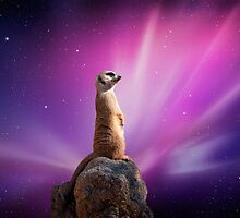 Suricat In Space by Eliotmad