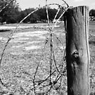 Barbed Wire 1 by Karah Couch