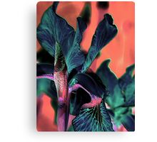 Lily of a different color ! Canvas Print