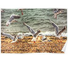 Gull Fight Poster